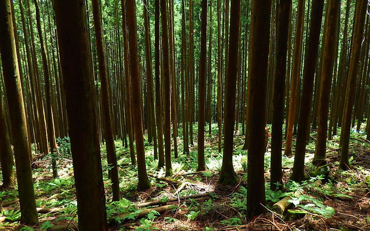 富山県産の原木